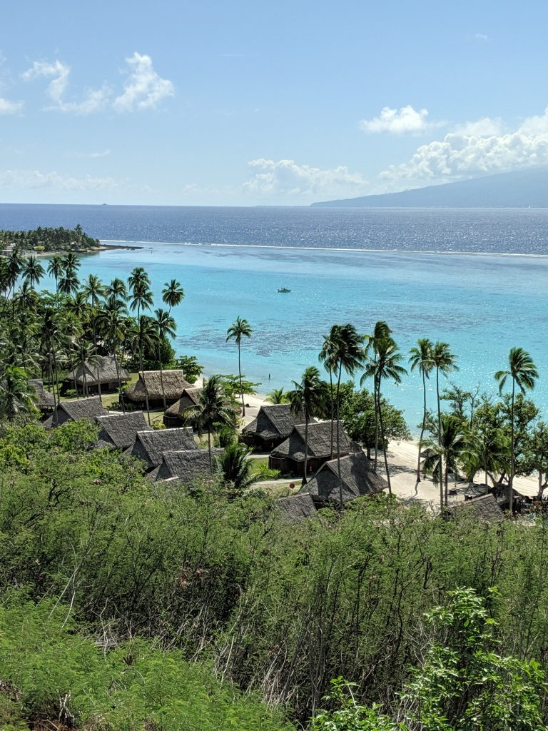 Palm Trees on a Sunny & Sandy beach overlooking the ocean.  Paradise Found in French Polynesia